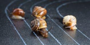 Slakken op het atletische spoor Stock Afbeeldingen