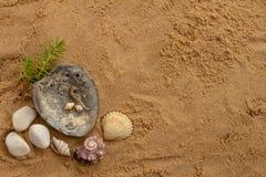 Slakken op het strand Te schrijven beschikbare ruimte stock afbeelding
