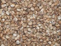 Slakken voor het koken op een tribune in een Spaanse markt Stock Afbeelding