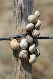 Slakkenduinen op een omheining Royalty-vrije Stock Fotografie