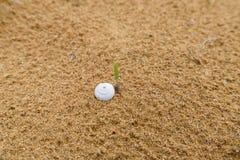 Slakshell in het zand Royalty-vrije Stock Foto