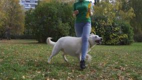 Slalom der Hund stock video
