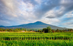 Slamet Mountain in the morning Royalty Free Stock Images