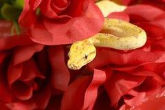 Slang in de rozen Royalty-vrije Stock Foto