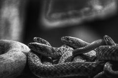 slangen royalty-vrije stock foto
