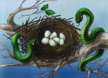 Slangen in het nest van de vogel Royalty-vrije Stock Afbeeldingen