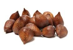 Slangfruit bruin, flora royalty-vrije stock afbeelding