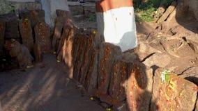 Slangtempel in India in openlucht stock video