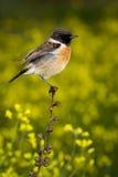 Slanke vogel op een slanke tak Stock Foto's