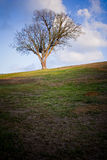 Slant. Lonely tree in park on the top of hill Stock Photography
