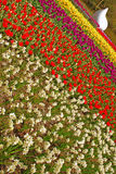 Slanted Angle of Different Tulip colours in Keukenhof Stock Photos