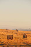 Slanted field. Hay piles. Stock Photography