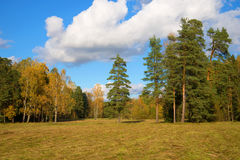 Slanted field and suburb of the wood in the October sunny day Stock Photo