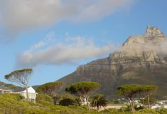 Slanted trees and a mountain in Cape Town South Africa Royalty Free Stock Photo