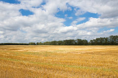 Slanted wheat field Stock Photos