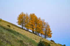 Slanted yellow grove of apens on hill stock photos