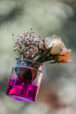 Slanting flower vase. In a jar shape with pink colour rose flowers and a bunch of flower buds with dark pink colour water Stock Photos