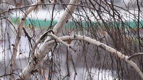 Slanting snow falls on background of leafless birch tree crown in city stock video