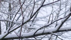 Slanting snow falls on background of tree crown in winter day stock footage
