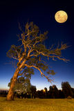 Slanting tree. An old slanting tree in a suburban nightscape Stock Photos