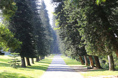 Slanting trees in park. Alley in park among slanting trees Royalty Free Stock Photo