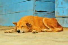 Slapende hond Stock Afbeelding