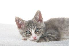 Slaperig gestreepte katkatje Stock Foto