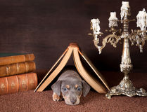Slaperig in het kader van een boek royalty-vrije stock foto