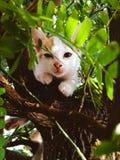 Slaperig katje op een boom stock fotografie