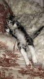 Slaperig katje stock afbeeldingen
