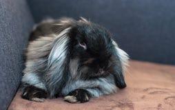 Slaperig konijn Royalty-vrije Stock Afbeelding