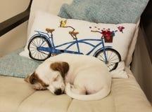 Slaperig puppy stock afbeeldingen