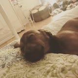 Slaperig puppy royalty-vrije stock afbeelding