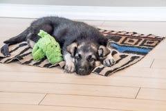 Slaperig Puppy en zijn huisdier klaar voor een dutje royalty-vrije stock afbeeldingen