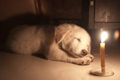 Slaperig puppy onder kaarslicht Stock Foto's
