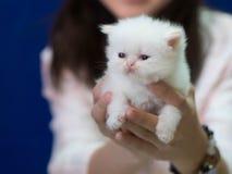 Slaperig weinig katje in vrouwelijke handen op blauwe achtergrond stock foto's