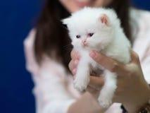 Slaperig weinig katje in vrouwelijke handen op blauwe achtergrond royalty-vrije stock foto's