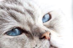 Slaperige blauwe ogen Stock Foto's