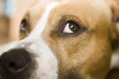 Slaperige hond Royalty-vrije Stock Fotografie