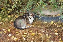 Slaperige hond! Stock Foto