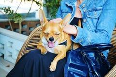 Slaperige Hond Stock Foto's