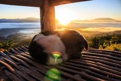 Slaperige hond met de berg Stock Afbeeldingen