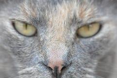 Slaperige kat stock foto's