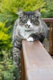 Slaperige kat stock afbeelding