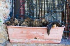 Slaperige kat. Royalty-vrije Stock Foto's