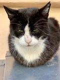 Slaperige kat die op muur rusten royalty-vrije stock foto