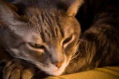 Slaperige kat door open haard Stock Foto