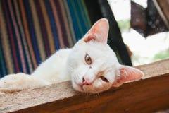Slaperige kat met zijde op achtergrond Stock Fotografie