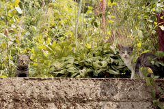 2 slaperige Katten in een tuin Stock Foto
