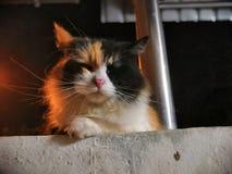 Slaperige leuke kat buiten het huis royalty-vrije stock afbeelding